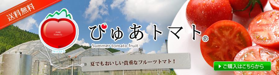 高知県仁淀川町・高原地のぴゅあトマト